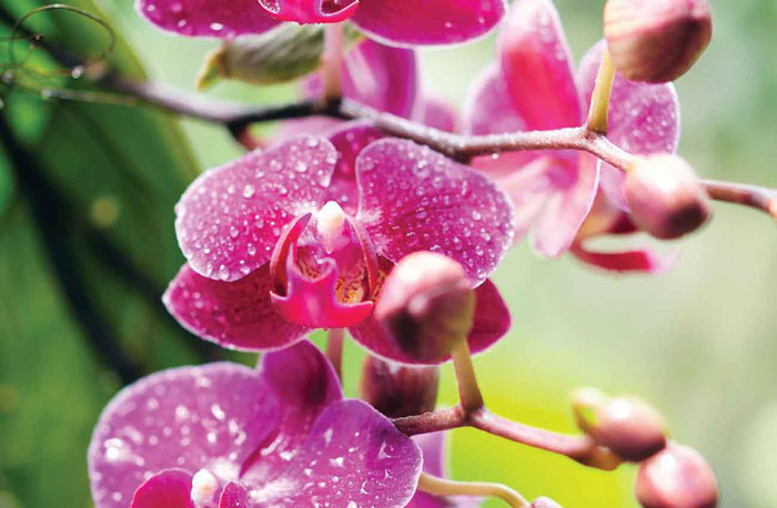 Toowoomba Orchid Society show