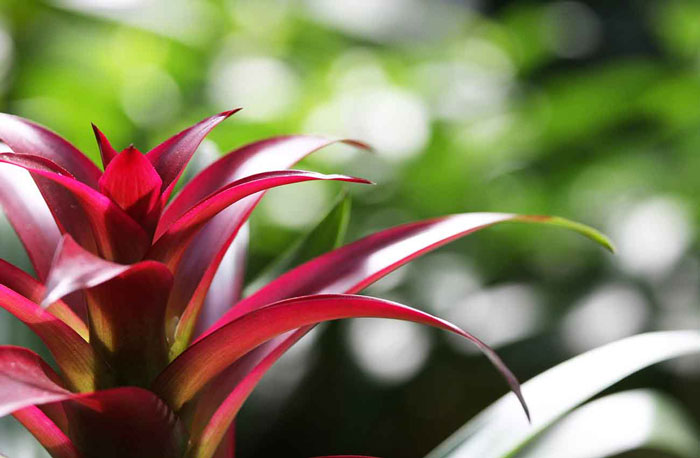 Toowoomba and Districts Bromeliad Society Show