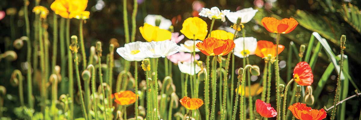 Cultivate Country Garden Tours