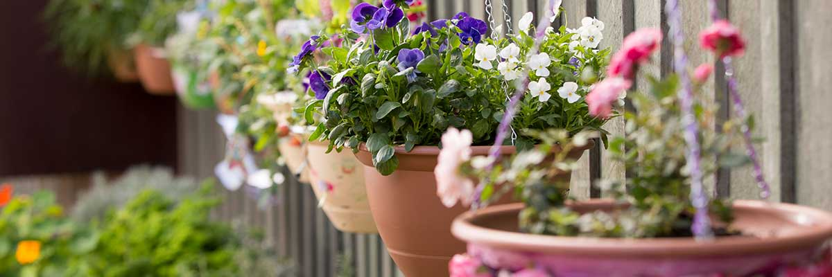 Hanging Basket Display
